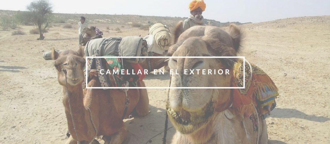"""Camellar"" en el exterior"
